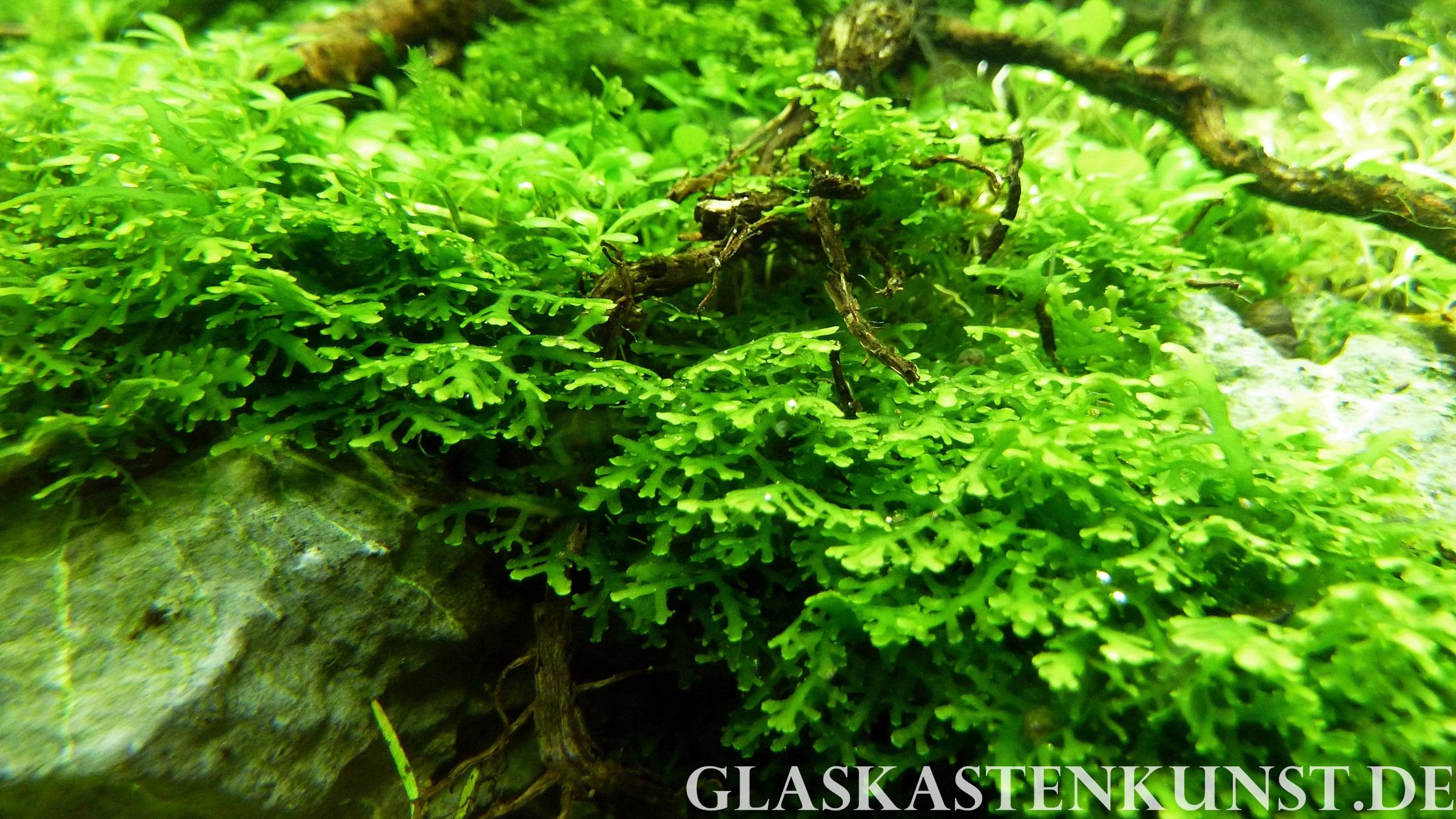 Bepflanzung Glaskastenkunst