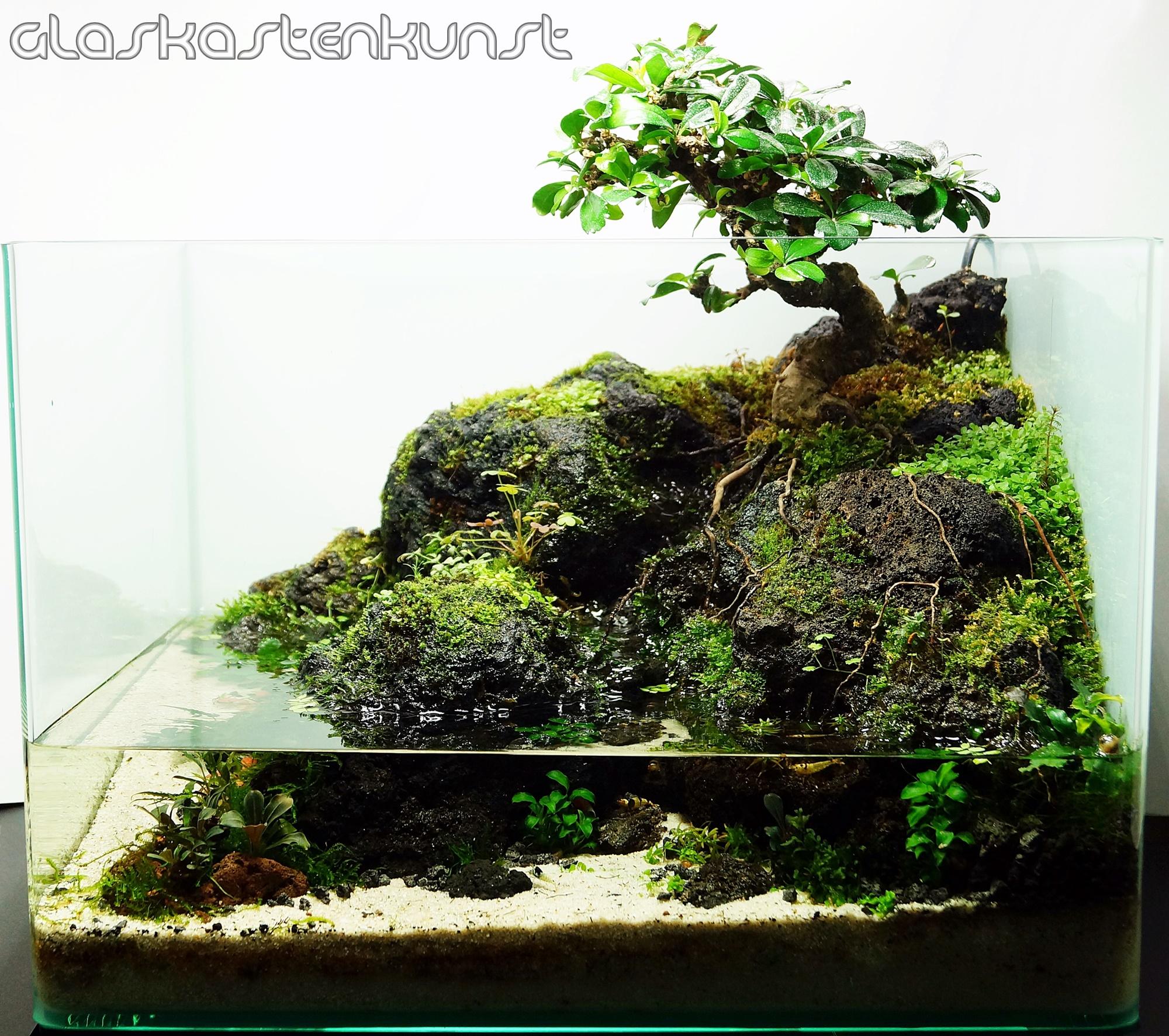 Bonsai Led Beleuchtung | Calm Carmona Glaskastenkunst
